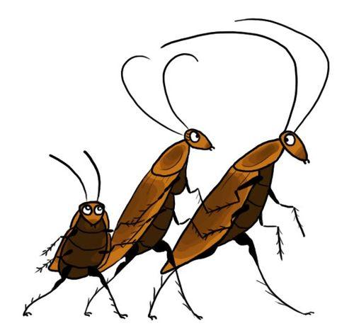 CockroachesColor - cartoon