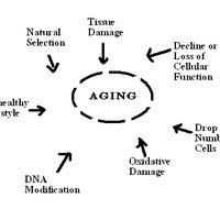 Aging-factors