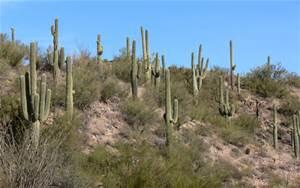 Arizonadesert