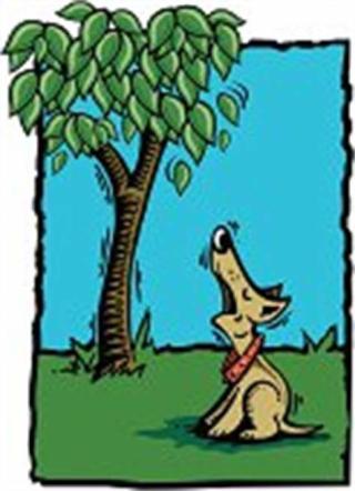 Barkingupthewrongtree