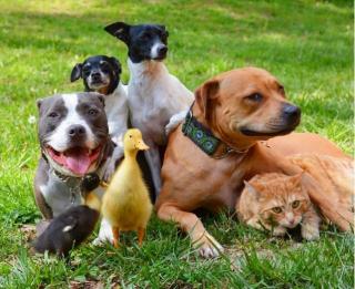 Dog-family-640x522