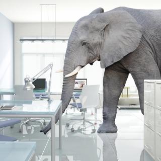 Elephantinroom